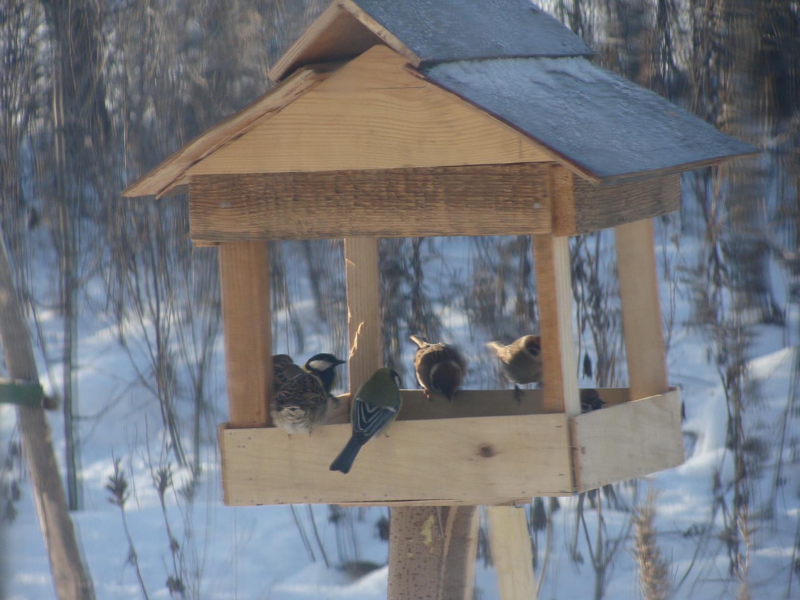 Птицы на кормушке фото